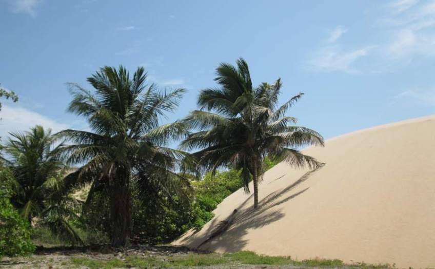 Palm trees and Mangroves at Prainha do Canto Verde.