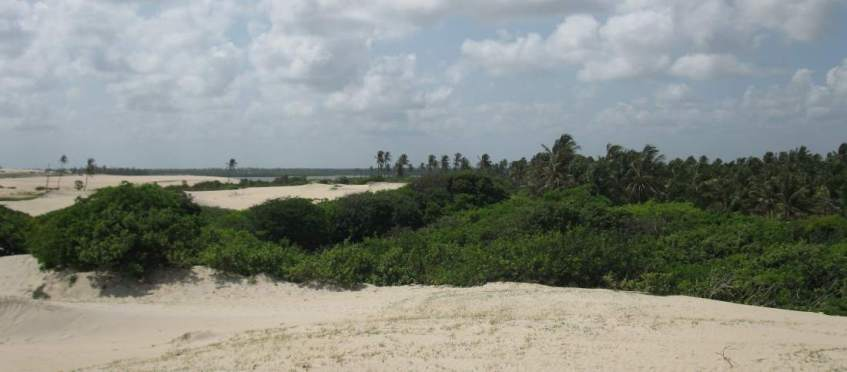 Palm trees and Mangroves at Prainha do Canto Verde.